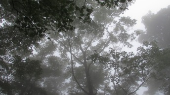 Fog covered forest near Mt. Fuji