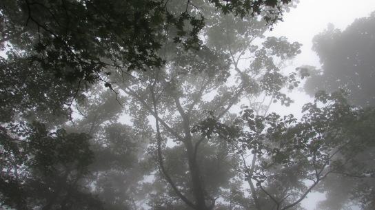 Fog covered forest near Mt. Fuji
