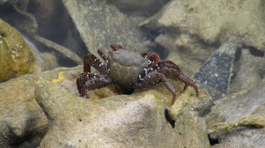A neat-looking crab in the Bahamas