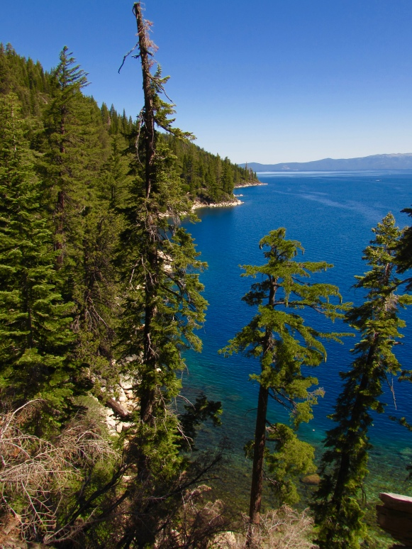 The forested shoreline of southern Lake Tahoe